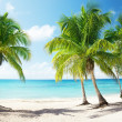 Stock Photo: Caribbeseand coconut palms