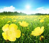 Bereich der frühlingsblumen — Stockfoto