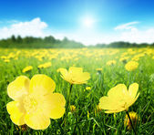 Field of spring flowers — ストック写真