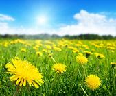 春の花のフィールド — ストック写真