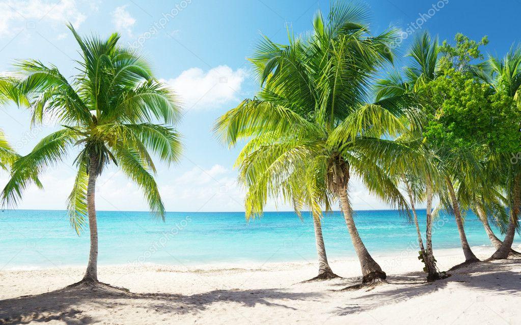 椰子树简笔画图片高清大图