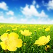 Field of spring flowers — Stock Photo #9977763