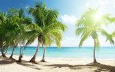 Mar do caribe e coqueiros — Foto Stock