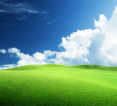 Field of grass and perfect sky — Stock Photo