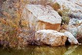 Escena del desierto con agua — Foto de Stock