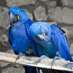 Parrots — Stock Photo #10608240