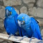 Parrots — Stock Photo #10608247
