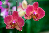 Yellow red orchid — Stock Photo