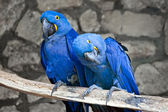 Parrots — Stockfoto