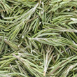 Rosemary (Rosmarinus officinalis). — Stock Photo #10613919