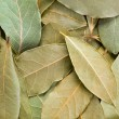 Stock Photo: Bay Leaves background.