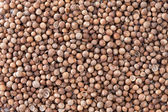 Coriander Seeds (Coriandrum sativum) texture background. — Stock Photo