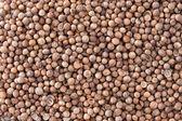 Coriander Seeds (Coriandrum sativum) texture background. — Stock Photo