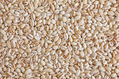 Pearl barley (pearled barley) — Stock Photo