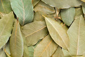 Bay Leaves background. — Stock Photo