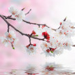 White spring flowers on a tree branch over pink bokeh background — Stock Photo