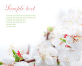 Spring flowers border with sample text — Stock Photo