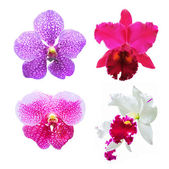 Set of flower orchid ( Cattleya, Vanda ) — Stock Photo