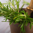 Fresh rosemary in a mortar - Stock Photo