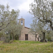 Aedicula in a olive grove - Stock Photo