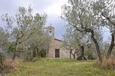 Aedicula in a olive grove — Stock Photo