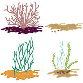 Seaweed isolated on white background — Stock Vector
