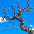 Dry tree branches over blue sky — Stock Photo
