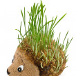 Stock Photo: Hedgehog with germinating wheat grass instead of spines