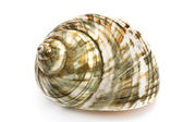 Spiral sea shell — Stock Photo