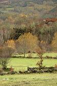 Autumn trees and meadows — Stock Photo