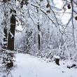 Winter — Stock Photo #8170533