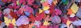 Folha de outono — Fotografia Stock