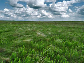 Meadow dull daytime — Stock Photo
