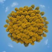Small planet with a yellow autumn trees — Stock Photo