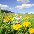 Rural Meadow — Foto Stock