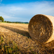 Stock Photo: Hay Bale on a harvested Field