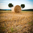 Stock Photo: Hay Bale and Trees