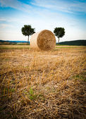 Hay Bale and Trees — Stock Photo