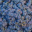 Bunch of blue grapes — Stockfoto