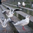 Some seagulls on dirty steps — Foto Stock