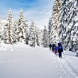 Foto Stock: Group of snowshoe hiker