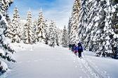 Gruppo di escursionisti con racchette da neve — Foto Stock