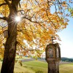 Colorful autumn tree — Stock Photo