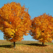 Stock Photo: Two colorful Trees