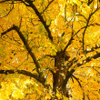 Autumn tree branches — Foto de Stock