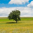 Single Tree — Stockfoto