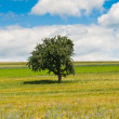 Royalty-Free Stock Photo: Single Tree