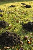 Lot of Molehills — Stock Photo
