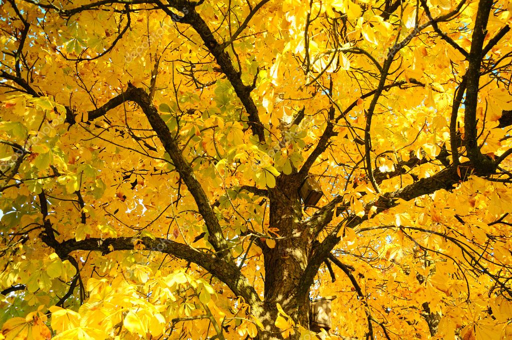 Autumn tree branches above with orange colors — Stock Photo #8795460