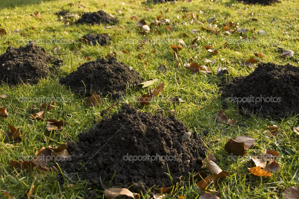Lot of Molehills in the garden - shallow DOF — Stock Photo #8798908